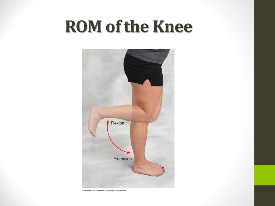 Anatomy of the Knee. - ppt download