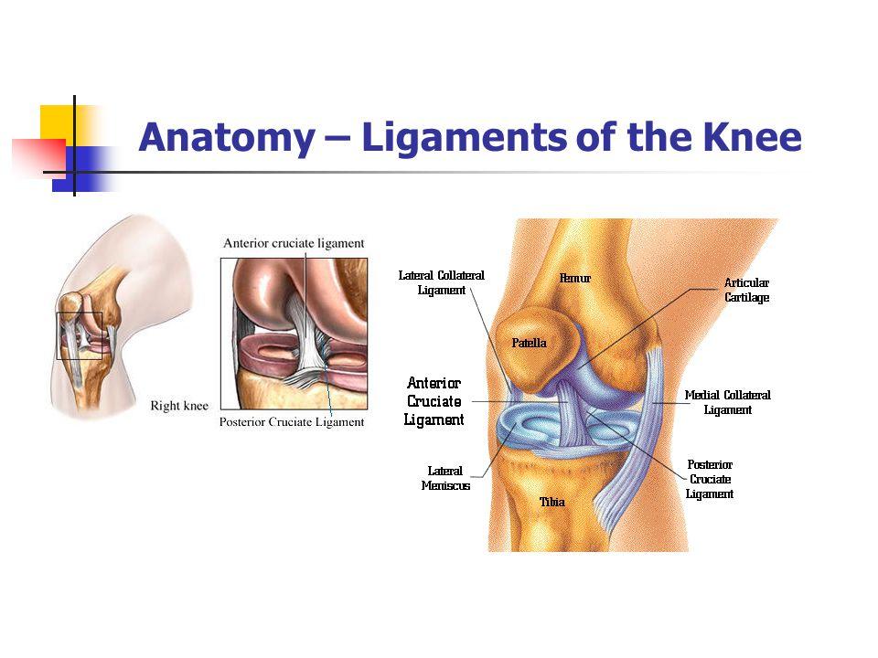 Anatomy of the knee - irosh.info