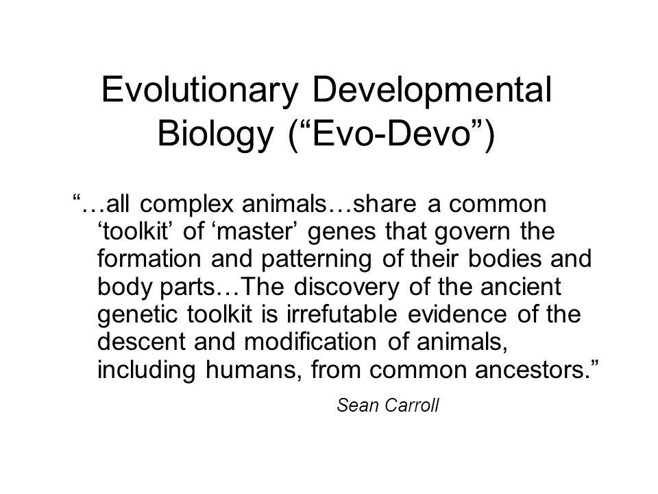 Creationism evolution and intelligent design ppt download evolutionary developmental biology evo devo fandeluxe Images