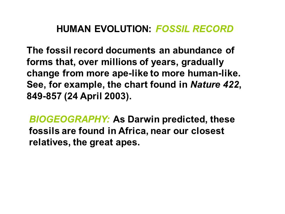 the human evolution and the fossil record Rethinking human evolution  fifty years ago the human fossil record was fairly sparse,  human evolution thus became the story of a long,.