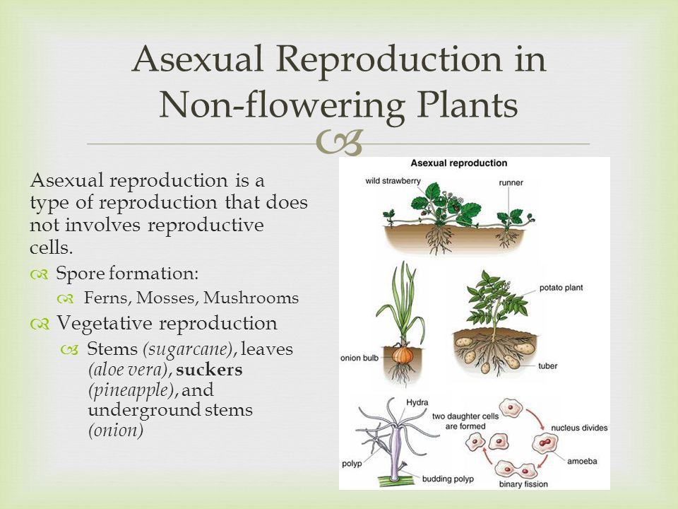 Vegetative Asexual Reproduction PLANT LIFE 4thQ: Unit ...