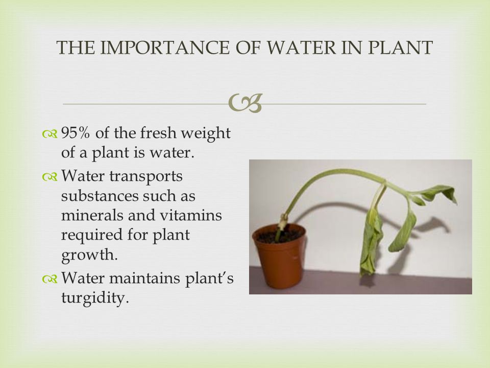 the importance of water in plant growth The salt tolerance of a specific crop depends on its ability to extract water from salinised soils salinity affects production in crops, pastures and trees by interfering with nitrogen uptake, reducing growth and stopping plant reproduction some ions (particularly chloride) are toxic to plants and as the concentration of these ions increases, the plant is poisoned and dies water.