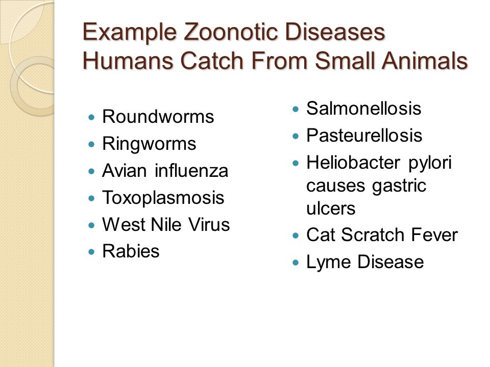 Cat Diseases Communicable To Humans