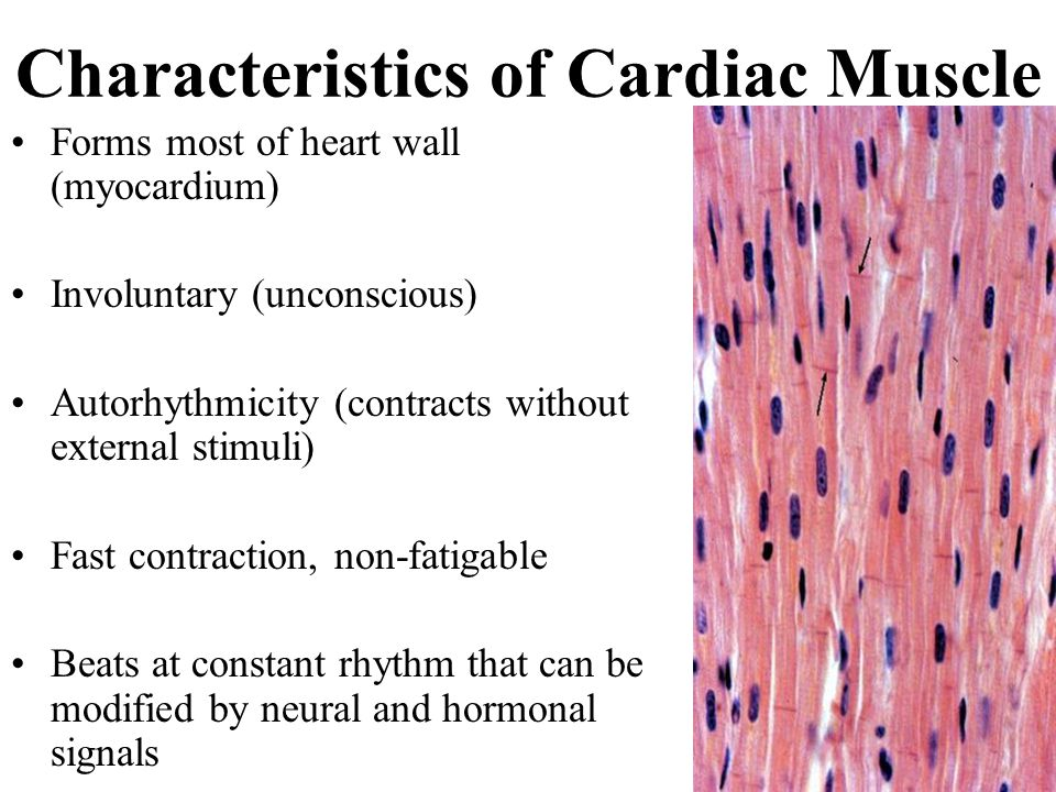 The characteristics of the heart as an organ