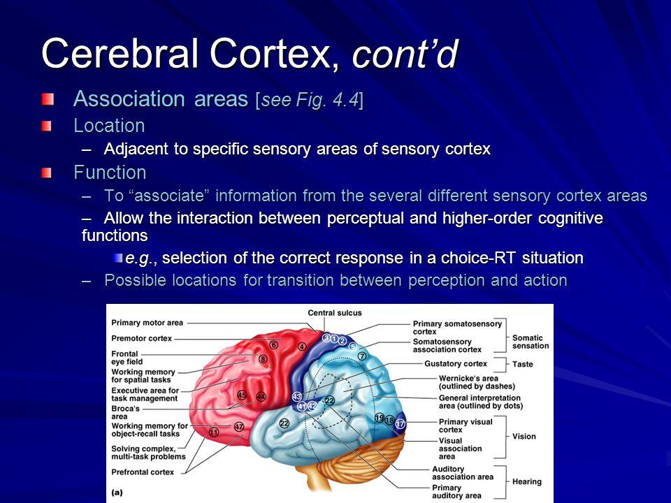 Neuromotor Basis For Motor Control