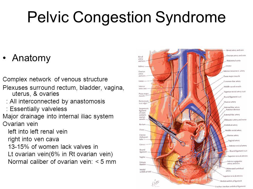 Nett Anatomie Des Ovars Fotos - Anatomie Ideen - finotti.info