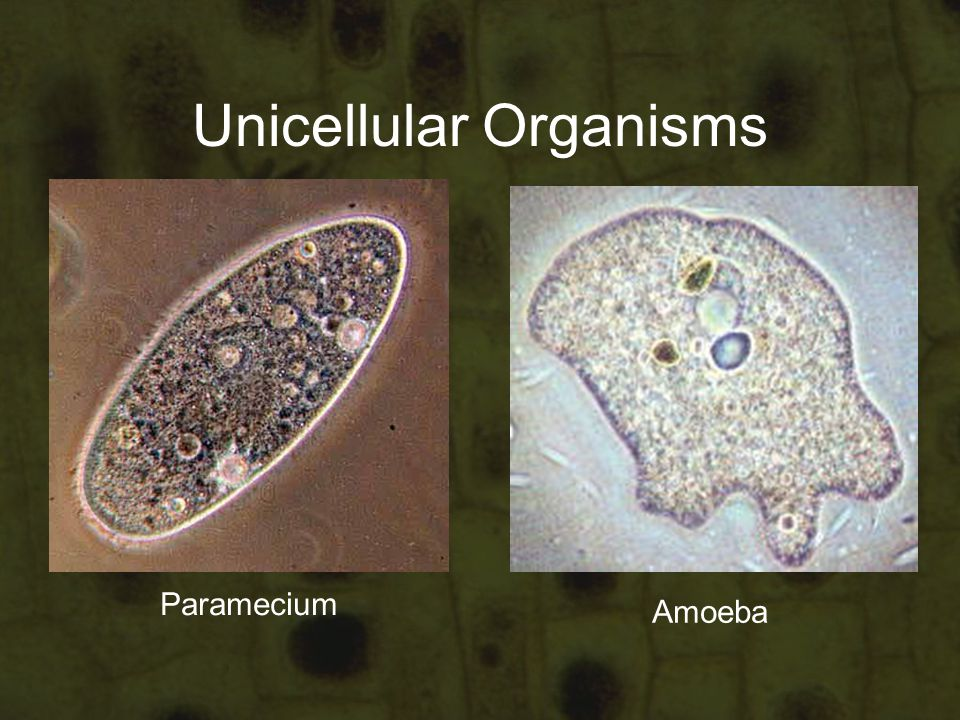 Cells Tissues And Organs Ppt Video Online Download