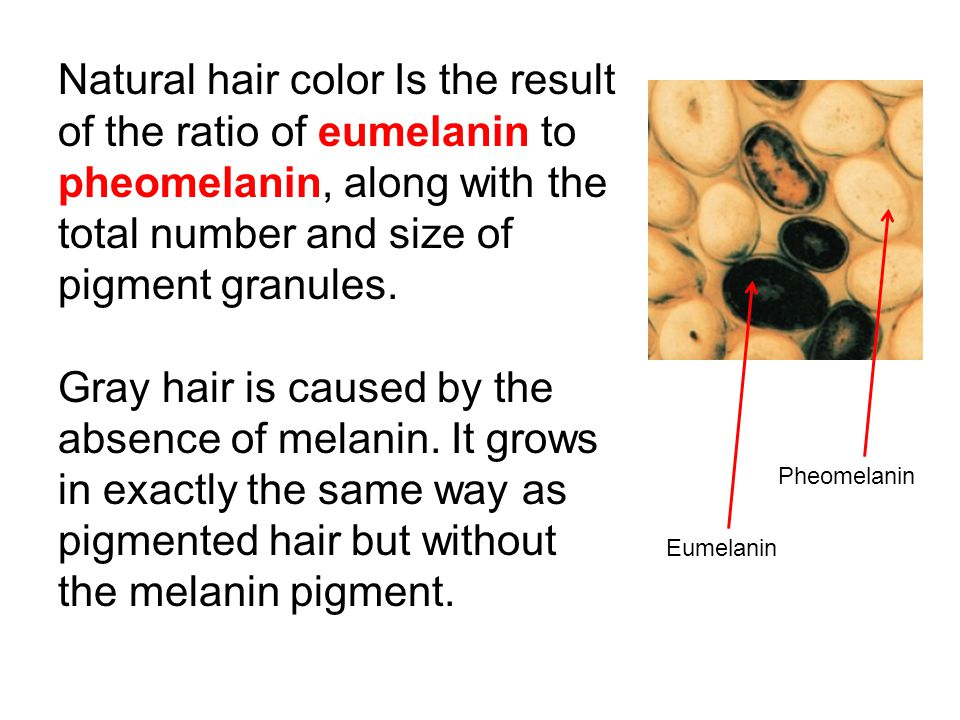 Properties Of The Hair And Scalp Ppt Download