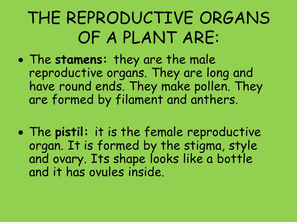 THE REPRODUCTIVE ORGANS OF A PLANT ARE: