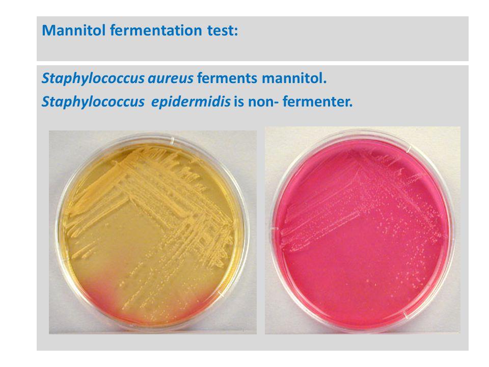 s epidermidis carbohydrate fermentation testing Fermentation of carbohydrates: d-glucose lactose maltose l-rhamnose sucrose + + +-+ l-arabinose cellobiose d-mannitol  s epidermidis is closely related to s aureus.