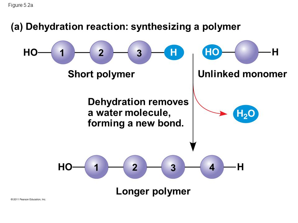 (a) Dehydration reaction: synthesizing a polymer