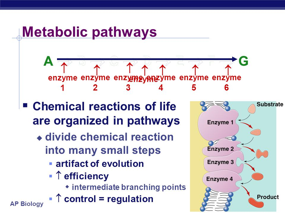 effects of enzyme efficiency Enzymes function and structure enzymes are very efficient catalysts for biochemical reactions they speed up reactions by providing an alternative reaction pathway of lower activation energy.