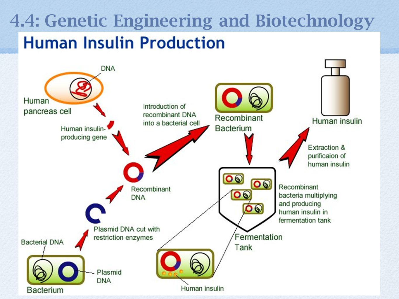 bacteria transformation in biotechnology