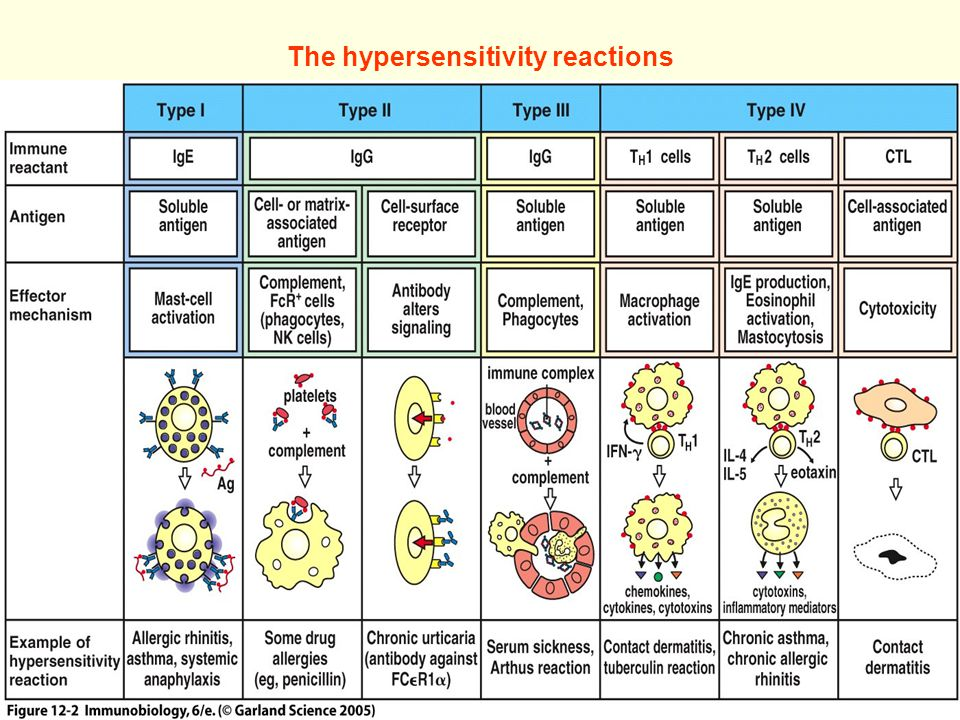 Allergy and Hypersensitivity - ppt download