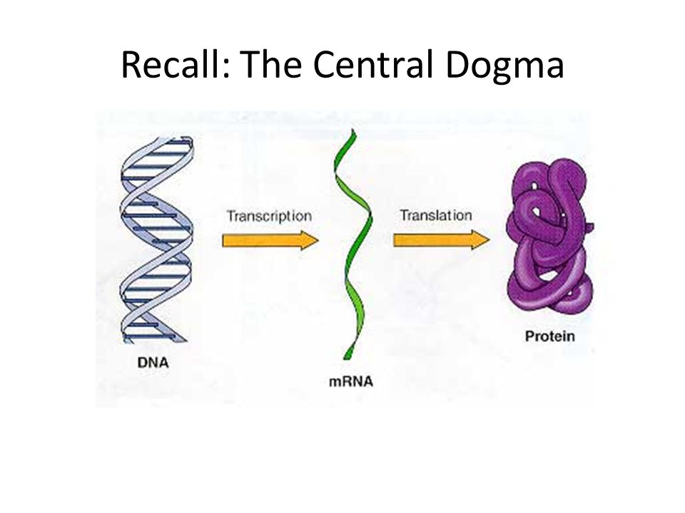 Recall: The Central Dogma