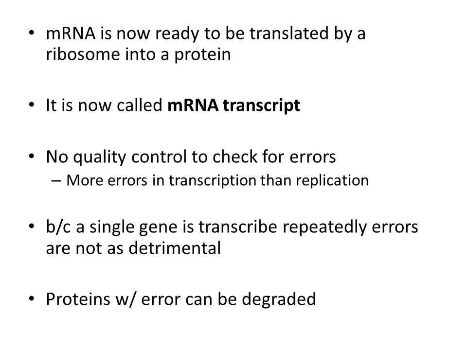 mRNA is now ready to be translated by a ribosome into a protein