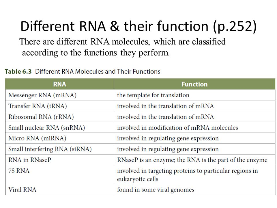 Different RNA & their function (p.252)