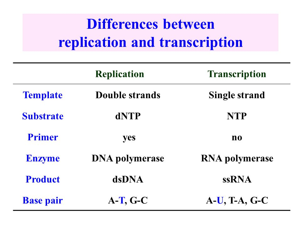 Transcription and post transcription modification ppt for Difference between template and coding strand