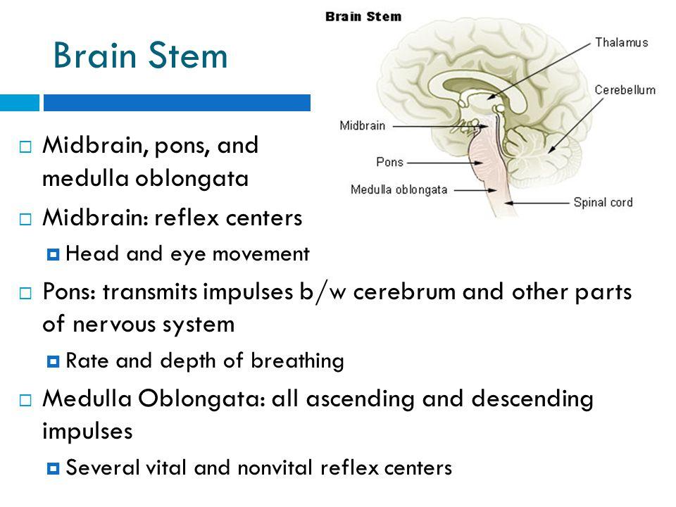 The Nervous System. - ppt video online download
