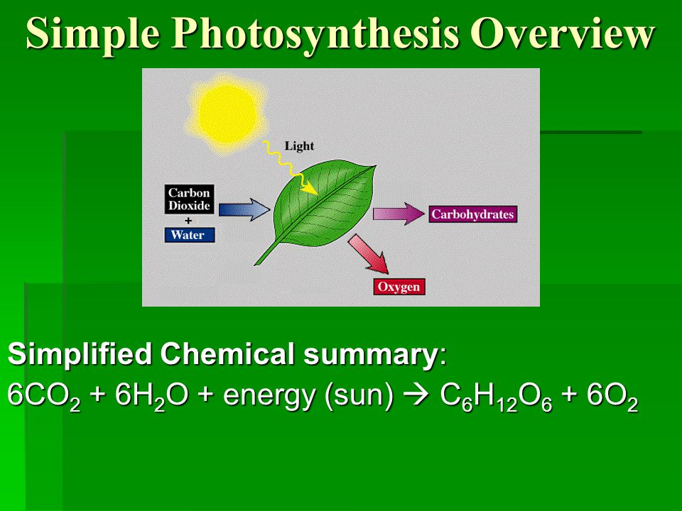 basic photosynthesis Photosynthesis: photosynthesis, process by which green plants and certain other organisms transform light energy into chemical energy.