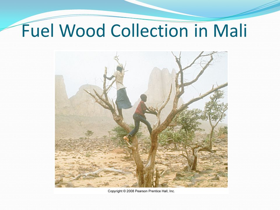 Fuel Wood Collection in Mali