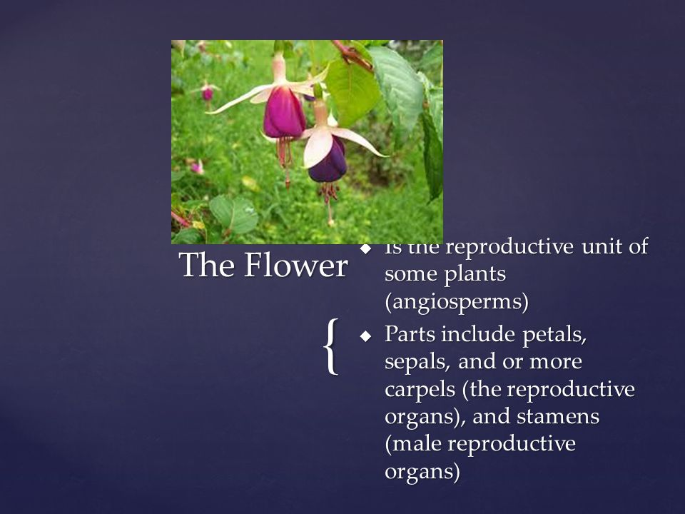 The Flower Is the reproductive unit of some plants (angiosperms)