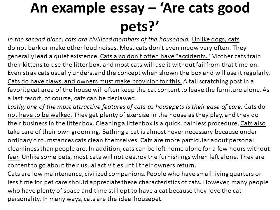 pet dogs vs. pet cats essay Debate dogs vs cats essaysdogs are better than cats for many reasons the first reason is say you have a favorite autographed football from the great emmitt days ago.