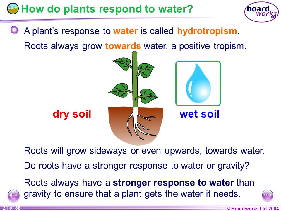 plants responses into water stress New phytol (1991), 118, 101-109 responses of potato plants to sulphur dioxide, water stress and their combination by ma qifu and frank murray school of biological and environmental science, murdoch university, wa 6150.