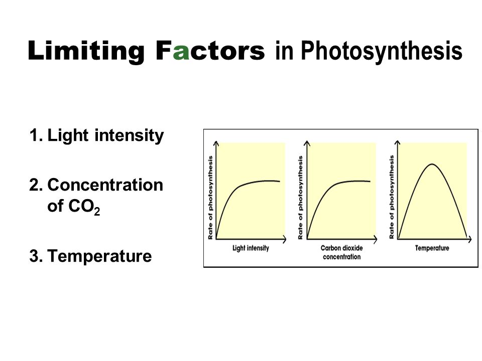 factors affecting rate of photosynthesis The rate of photosynthesis of a photosynthetic plant is affected by factors such as  light quality, light intensity, carbon dioxide concentration and temperature.