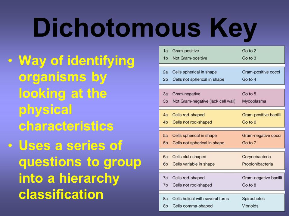 Dichotomous Key Way of identifying organisms by looking at the physical characteristics.