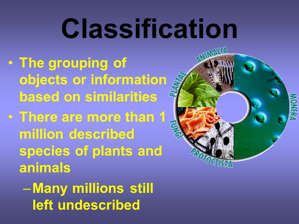 Classification The grouping of objects or information based on similarities. There are more than 1 million described species of plants and animals.