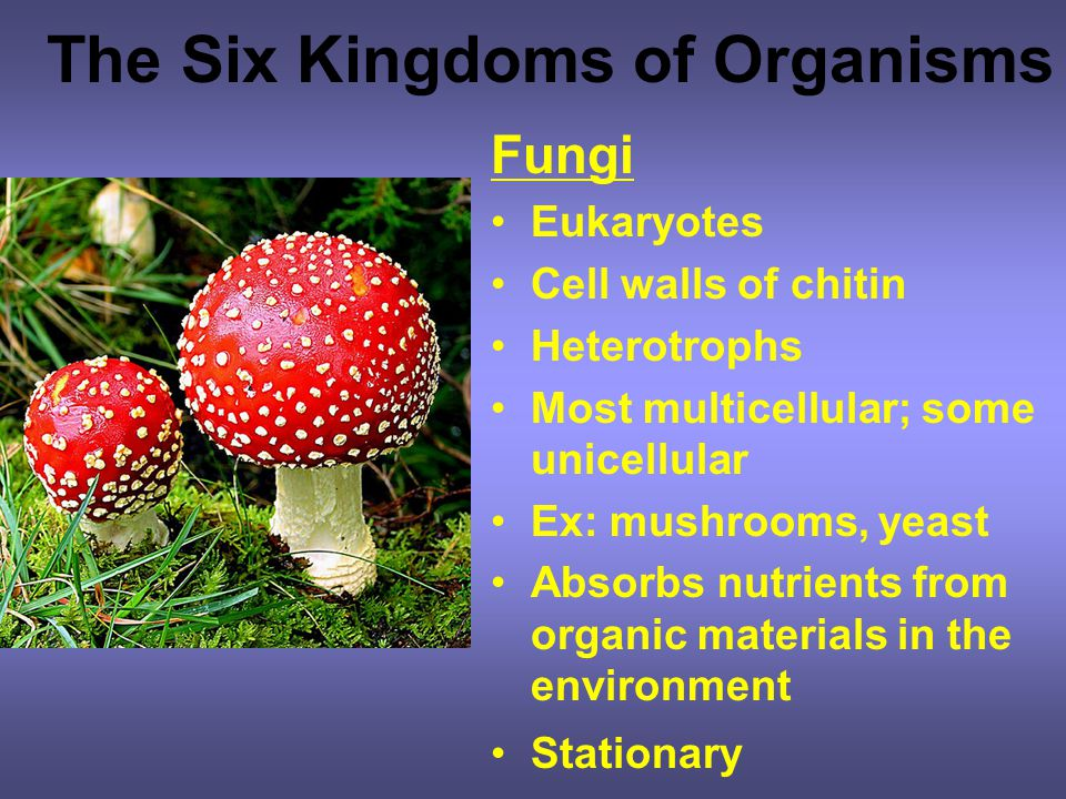 The Six Kingdoms of Organisms