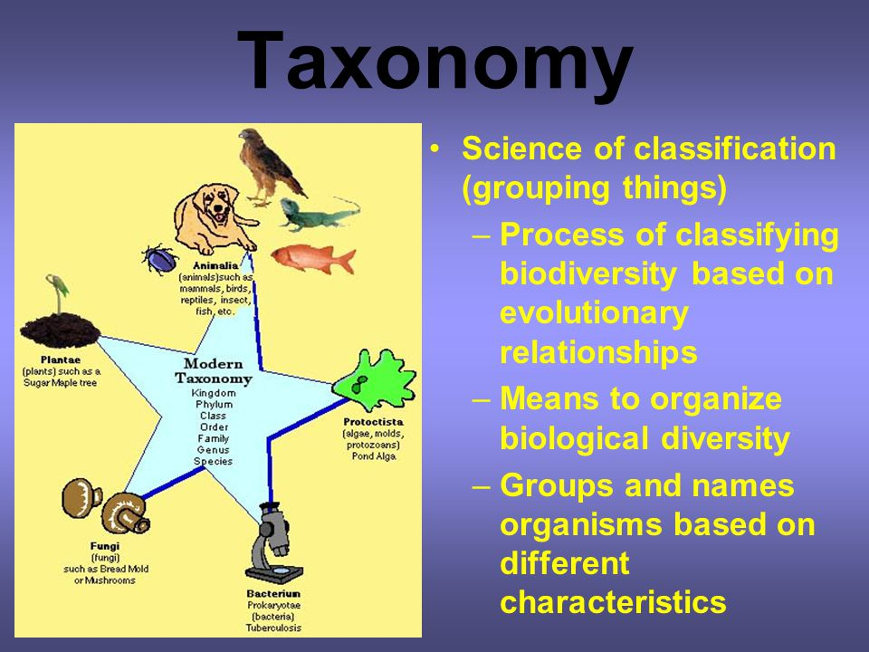 Taxonomy Science of classification (grouping things)