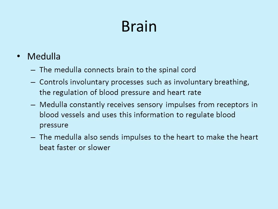 Brain Medulla The medulla connects brain to the spinal cord