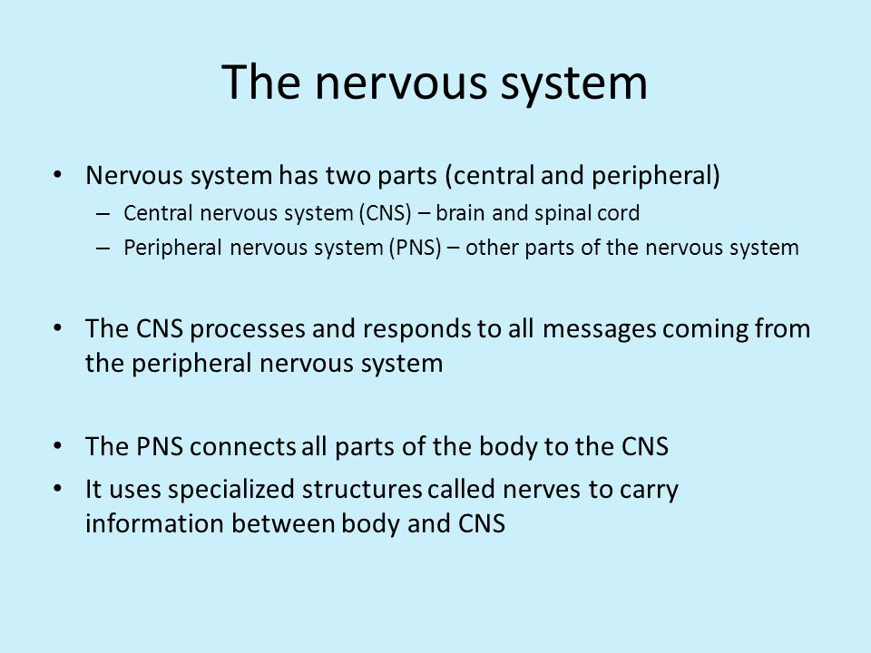 The nervous system Nervous system has two parts (central and peripheral) Central nervous system (CNS) – brain and spinal cord.