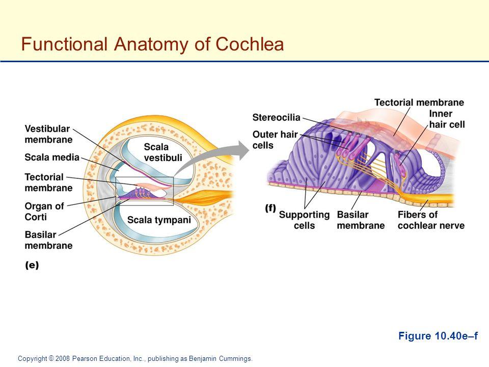 Contemporary Tympanic Membrane Anatomy Crest Human Anatomy Images