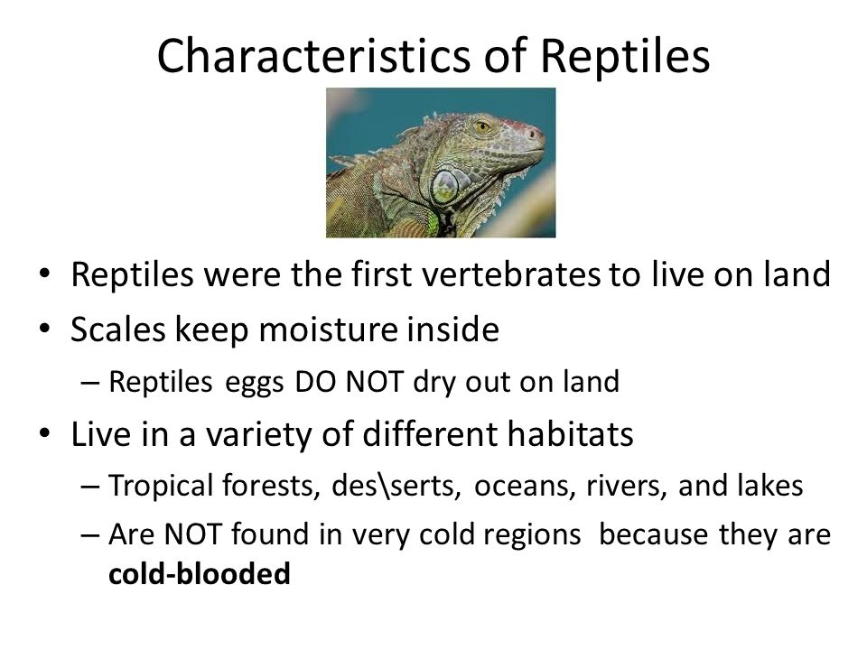 Types of Turtles  Giant Tortoise  Reptile Gardens