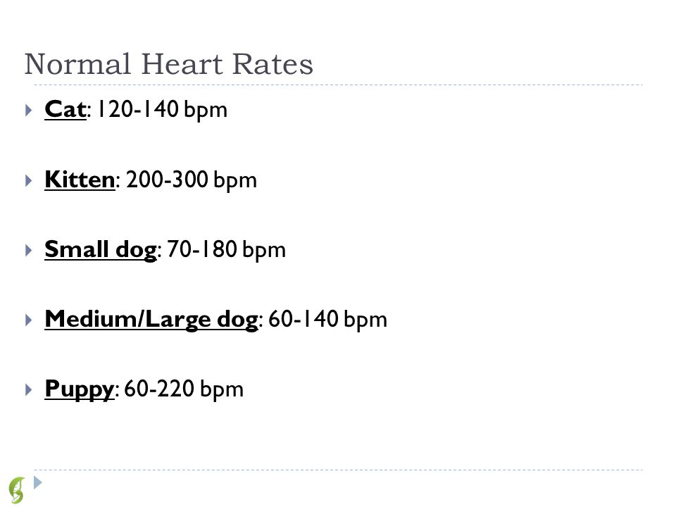 Normal Breaths Per Minute For Small Dog