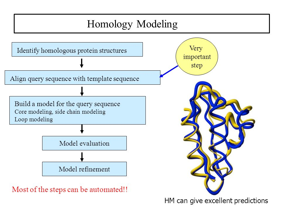 Anatomical Homology - Evidence of Evolution