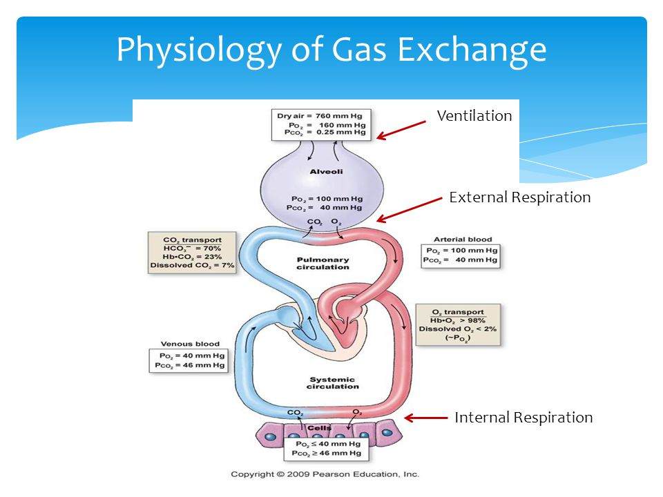exchange of gasses Gas exchange physiology animation for more medical videos visit:   website:   facebook: http.