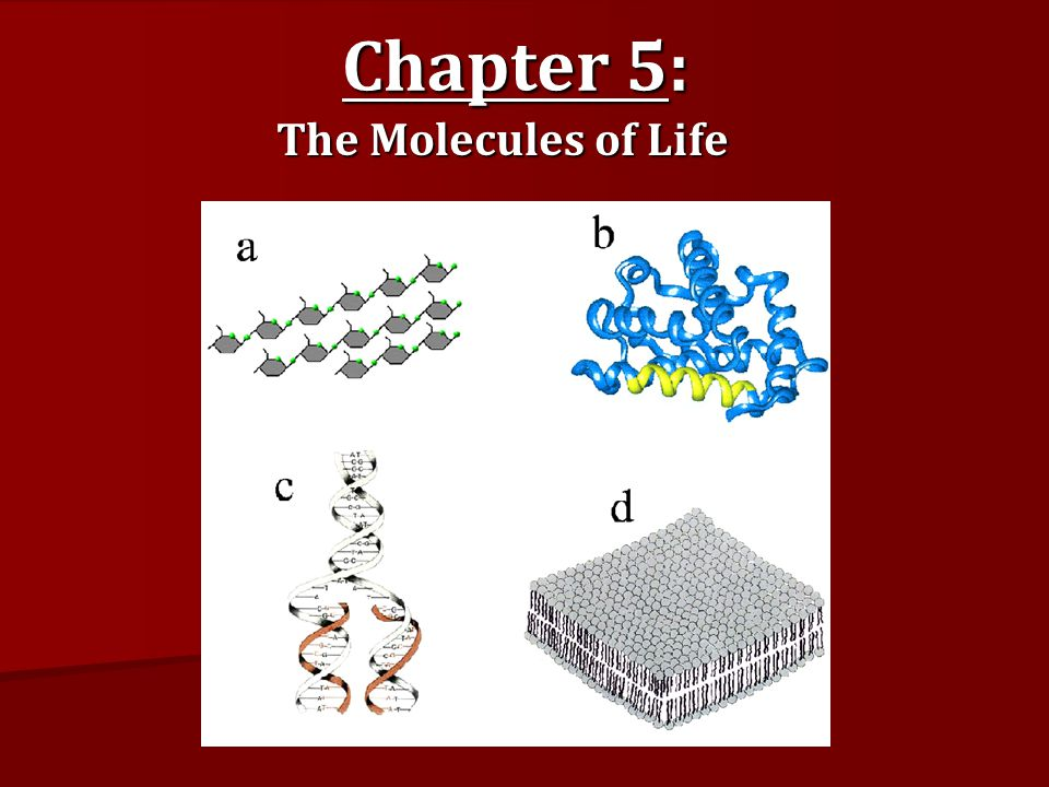 molecules of life The molecules of life: physical and chemical principles understanding the physical properties that make life possible this textbook provides an integrated physical and biochemical foundation for undergraduate students majoring in biology or health sciences.