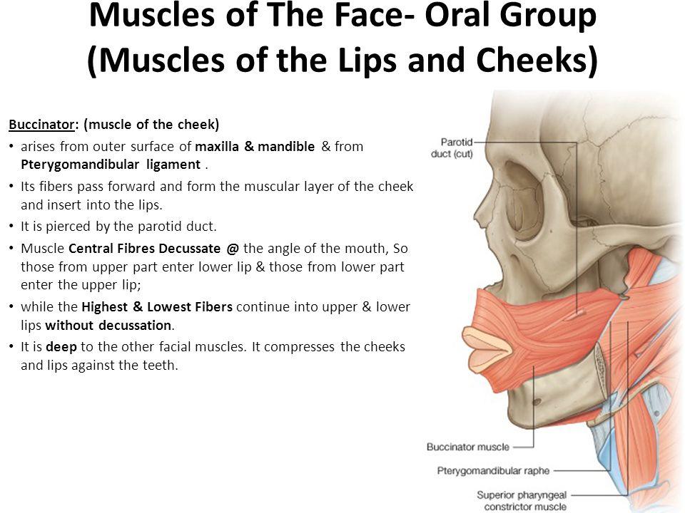 Face Oral 93