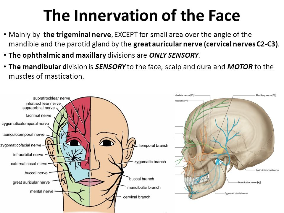 Research facial nerve