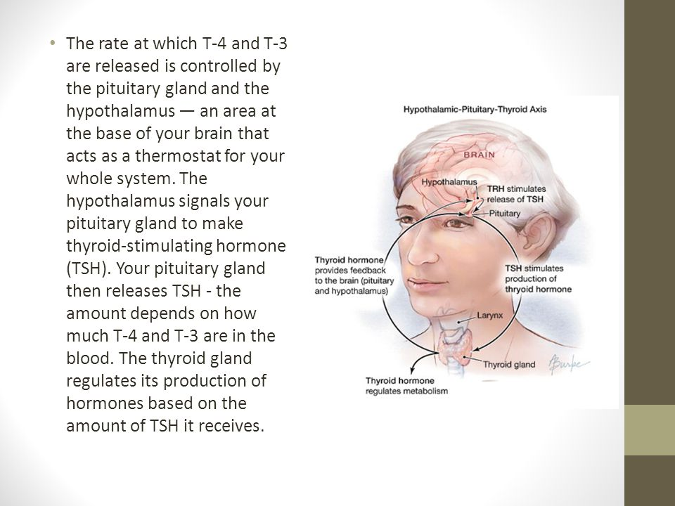 how to fix your pituitary gland