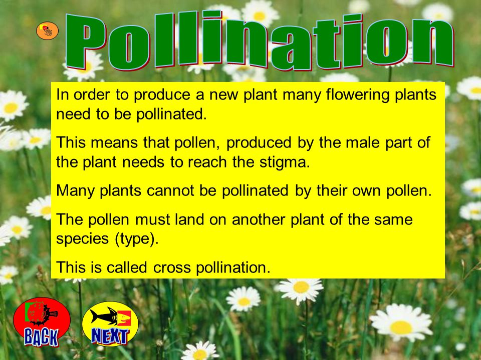 Pollination In order to produce a new plant many flowering plants need to be pollinated.