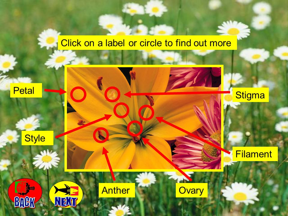 BACK NEXT Click on a label or circle to find out more Petal Stigma