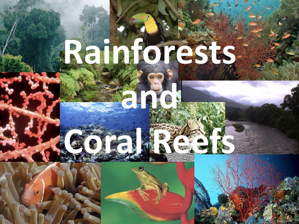 amazon rainforest plants collage. 1 rainforests and coral reefs amazon rainforest plants collage