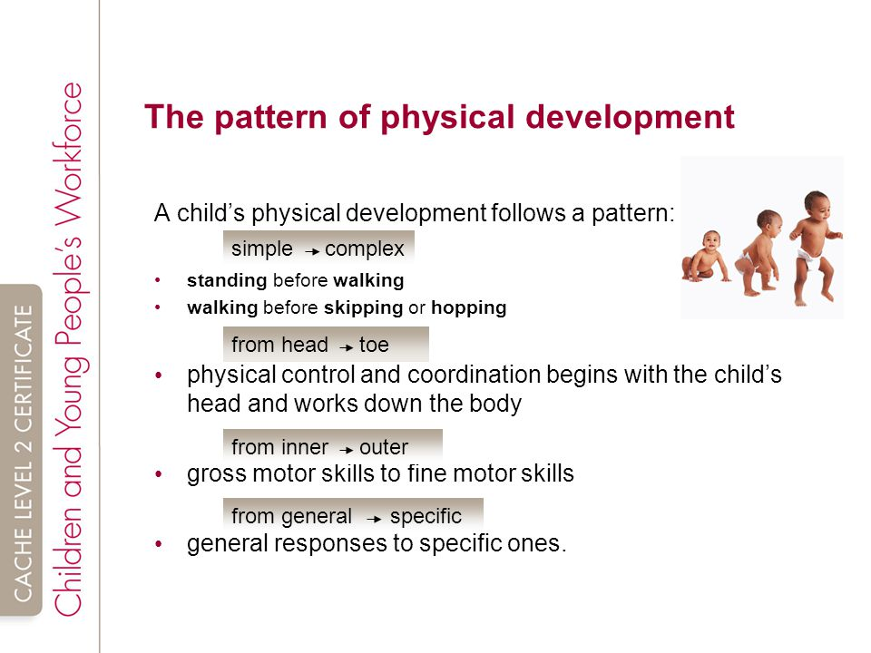 The pattern of development in the