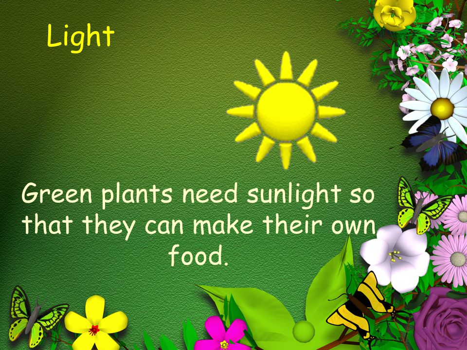What Plants Make What Food