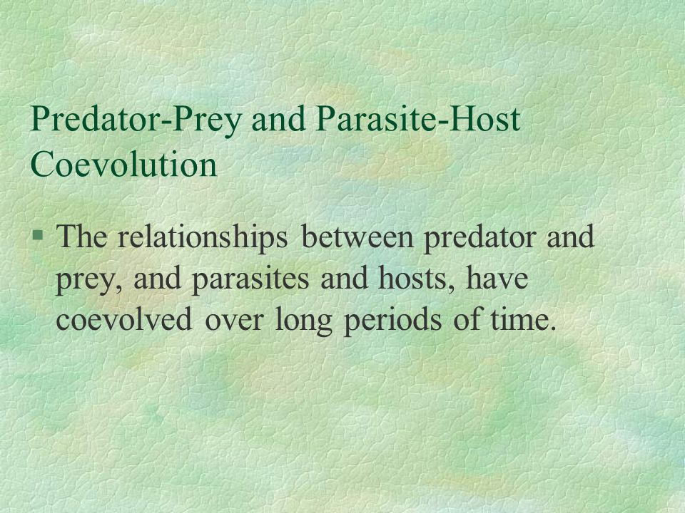 a discussion of the relationship between predator and prey Students watch videos and discuss ecological relationships with a focus on  ( predator/prey) ask: what is the ecological relationship between the monk seal.
